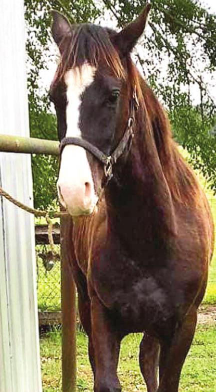 Cornerstone Ministries Selling Chances for AQHA Colt Raffle Fundraiser