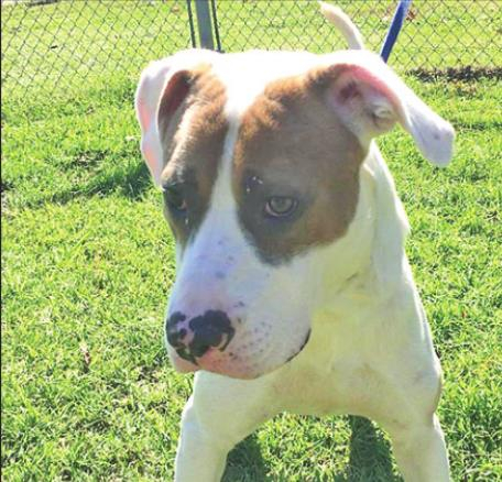 Pet Highlights of the Week DeSoto Parish Animal Services: