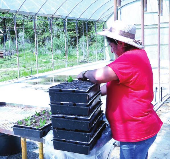 "Growing Like ""Weeds""; Legalized Hemp Farming in DeSoto Parish"