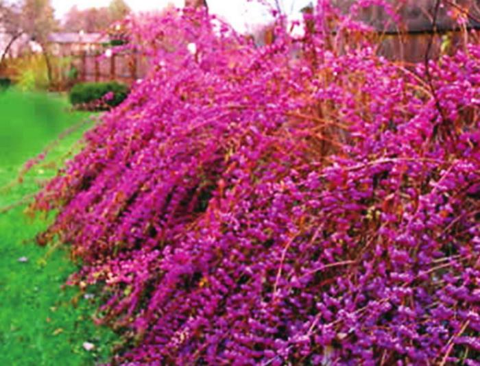 Fall 2020 Super Plants are LA Natives
