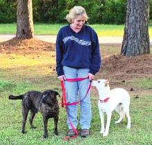 Fate of DeSoto's Yopp Animal Shelter Closing Still Undecided