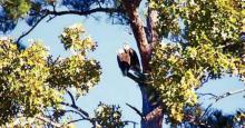 Eagles Soar Over Toledo Bend as We Remember Veterans Day