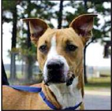DeSoto Parish Animal Services Pet Highlights of the Week