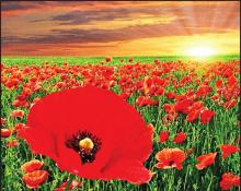 In Flanders Fields – A Memorial Day Tribute