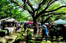 Melrose Plantation Arts and Crafts Festival visitors examine vendors' products displayed under centuries old live oak trees in front of the plantation' big house during last year's festival